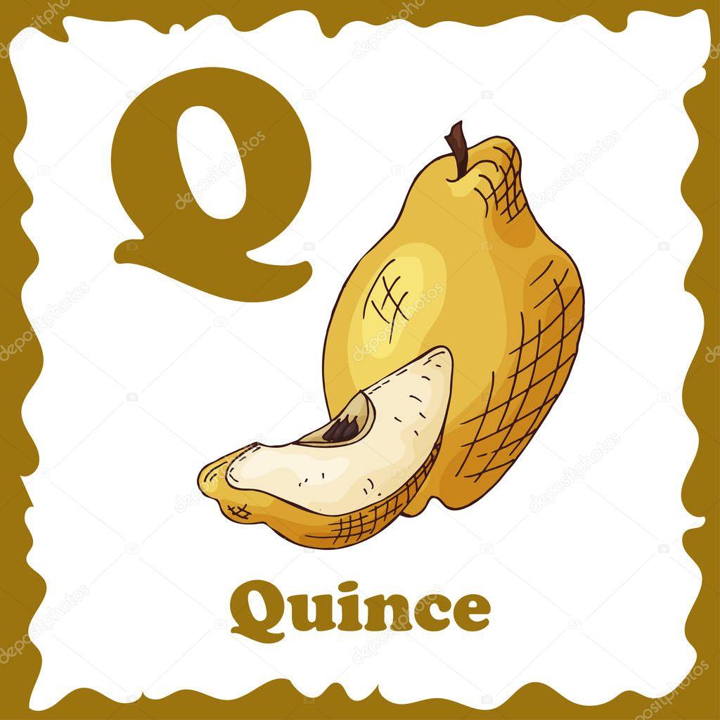 Eğitim Için Vektör Meyve Alfabe çizim çocuklar Için Harf Q Için