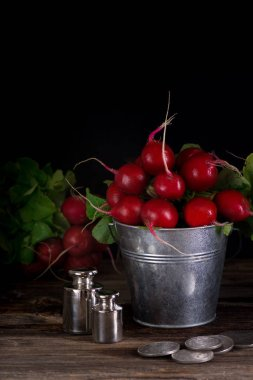 Fresh wet radishes in a bucket on the an old wooden table. Village style. Dark key photo.