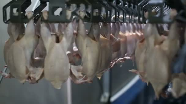 Chicken processing line at poultry farm. Chicken meat production line. Food industry.