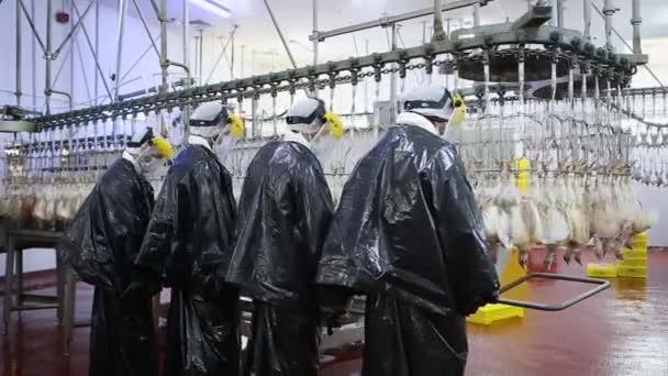 Hühnerverarbeitungslinie auf einer Geflügelfarm. Hühnerfleisch-Produktionslinie. Lebensmittelindustrie