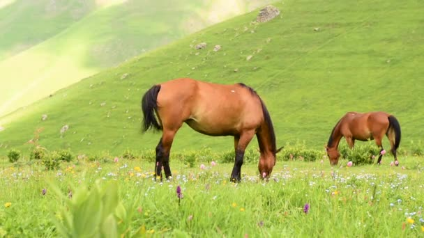 Two horses graze on pasture. Horse mare  on mountain pastures