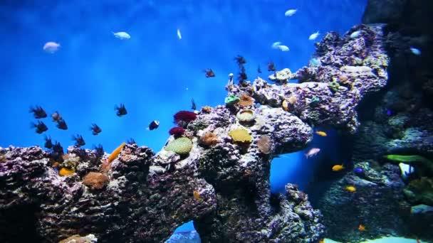 Aquarium with tropical fish.