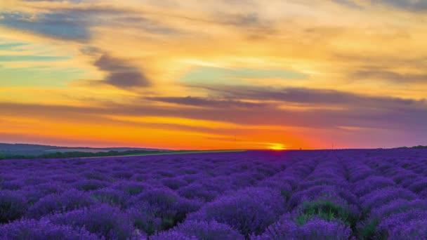 Zeitraffer des Sonnenuntergangs über einem Lavendelfeld.