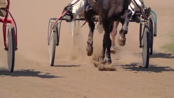 Horse Racing Close Up Of The Wagons And The Hooves Of A Running Horse. Slow motion.