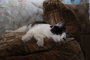 Black and white cute fluffy cat lying on the brown pillow