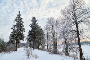 Winter landscape with snowy road, trees and blue sky with white clouds