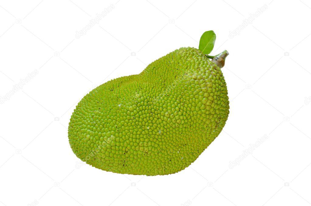 jack fruit tropical fruit on white background