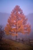 Paesaggio di montagna autunno e stand-alone giallo albero nella foresta nebbiosa