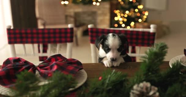 Vánoční štěňátko na novém roce