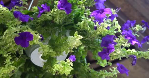 Hanging pot of purple flowers