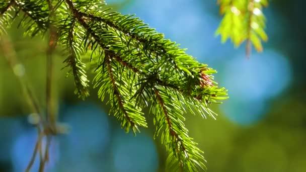 Jehličnatého lesa krásná příroda divoká