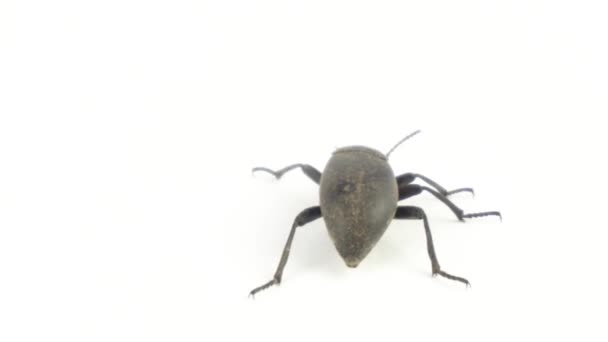 Beetle on a white background