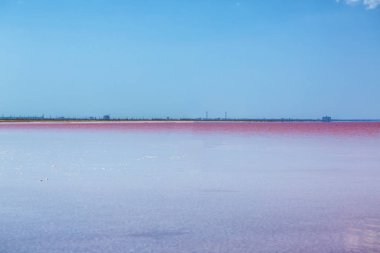 beautiful pink lake on a Sunny day