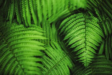 Perfect natural fern pattern. Beautiful background made with young green fern leaves.