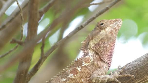 Detailní záběr krásný strom ještěrka