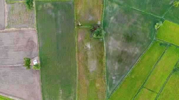 Pohled shora video ze dron rýžových polí s chalupami