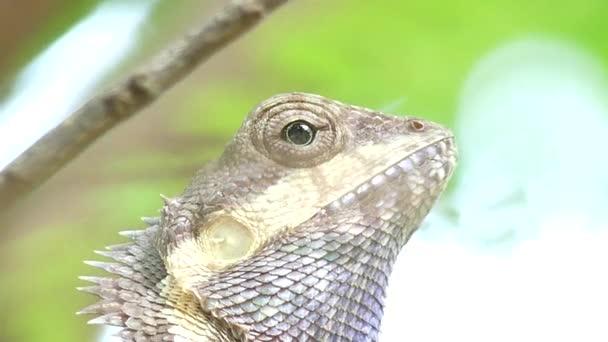 Detailní záběr chameleon na stromě