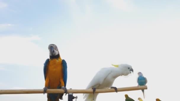 Krásný papoušek na strom větev a obloha pozadí,