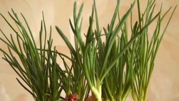 Fresh green leek. Healthy food
