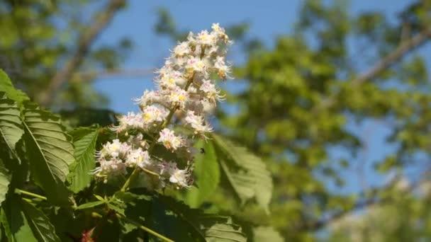 Pobočka Kvetoucí kaštany. Jarní květiny