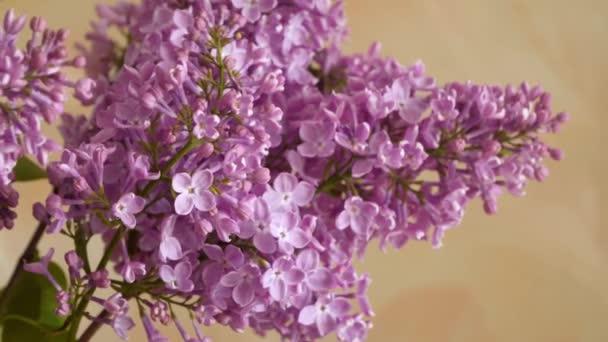 Pobočka kvetoucí šeřík. Jarní květiny
