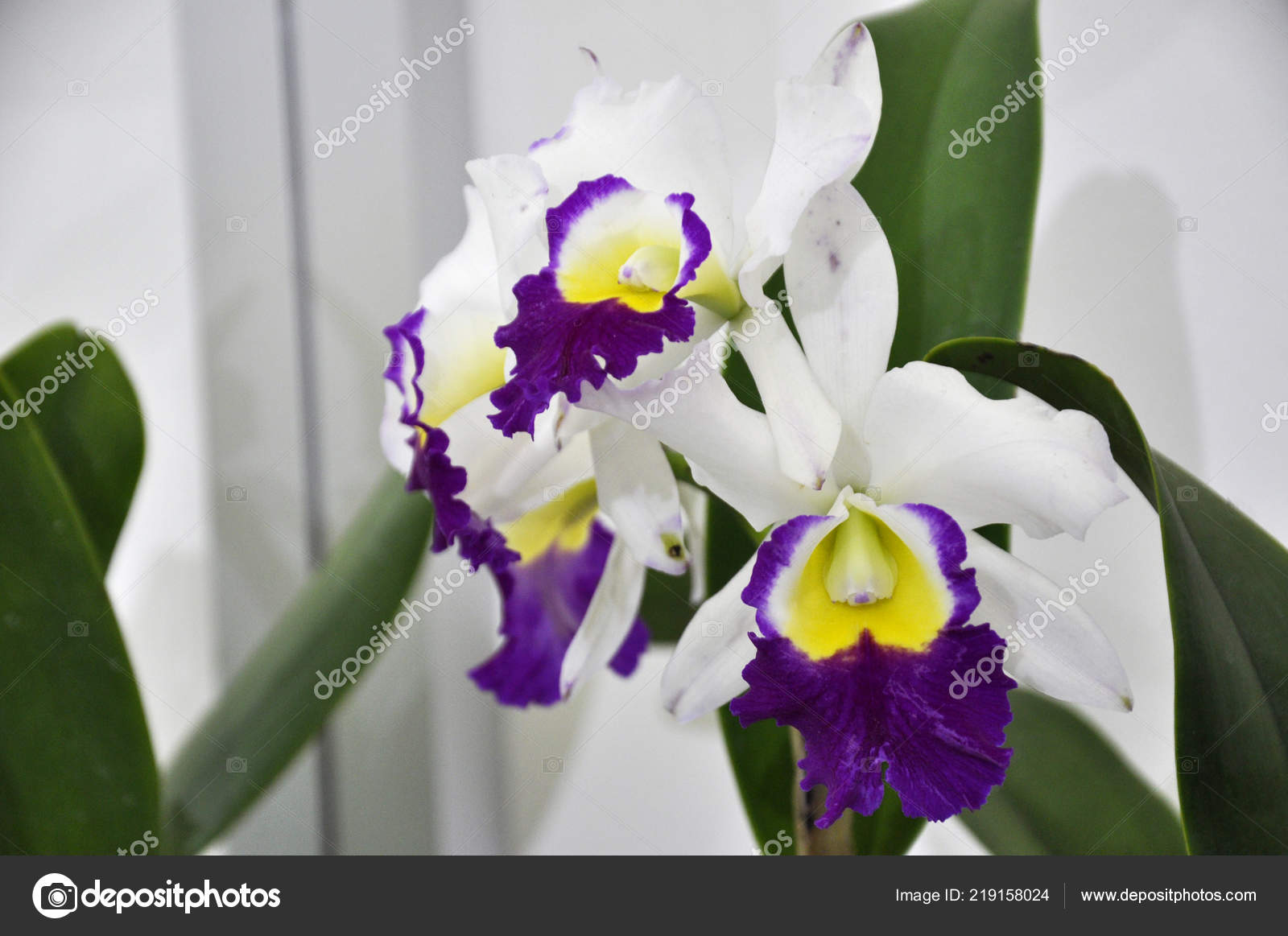 Kuala Lumpur Malaysia August 2018 Colorful Tropical Exotic Orchids