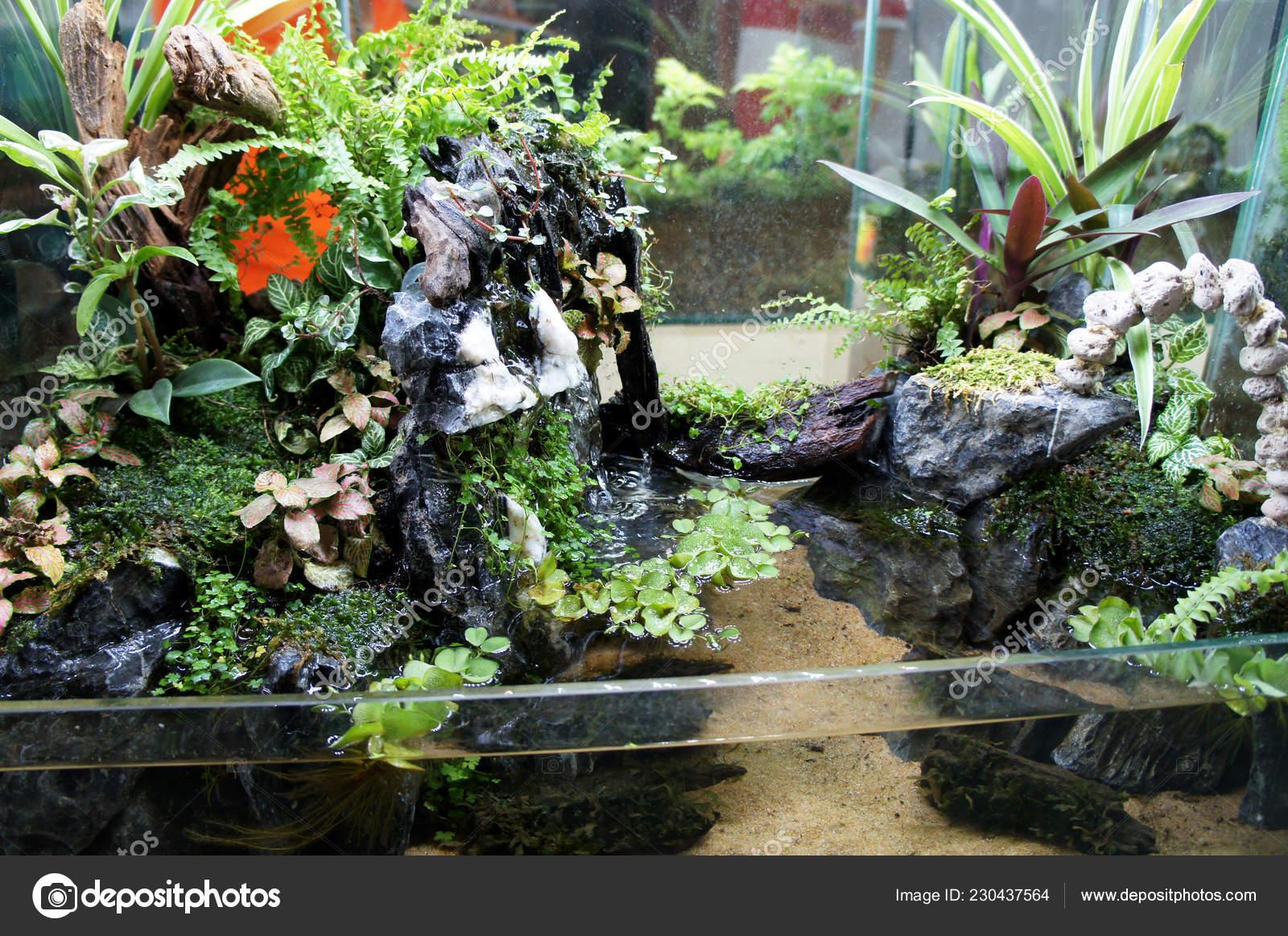 Aquascape Design Small Glass Aquarium Displayed Public Stock Photo C Aisyaqilumar 230437564