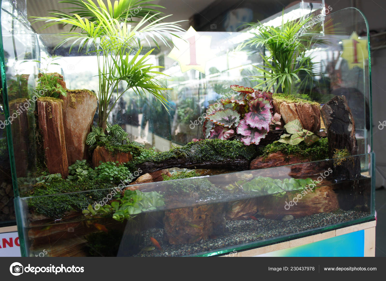 62+ Foto Aquarium Design Small Terbaik Download Gratis