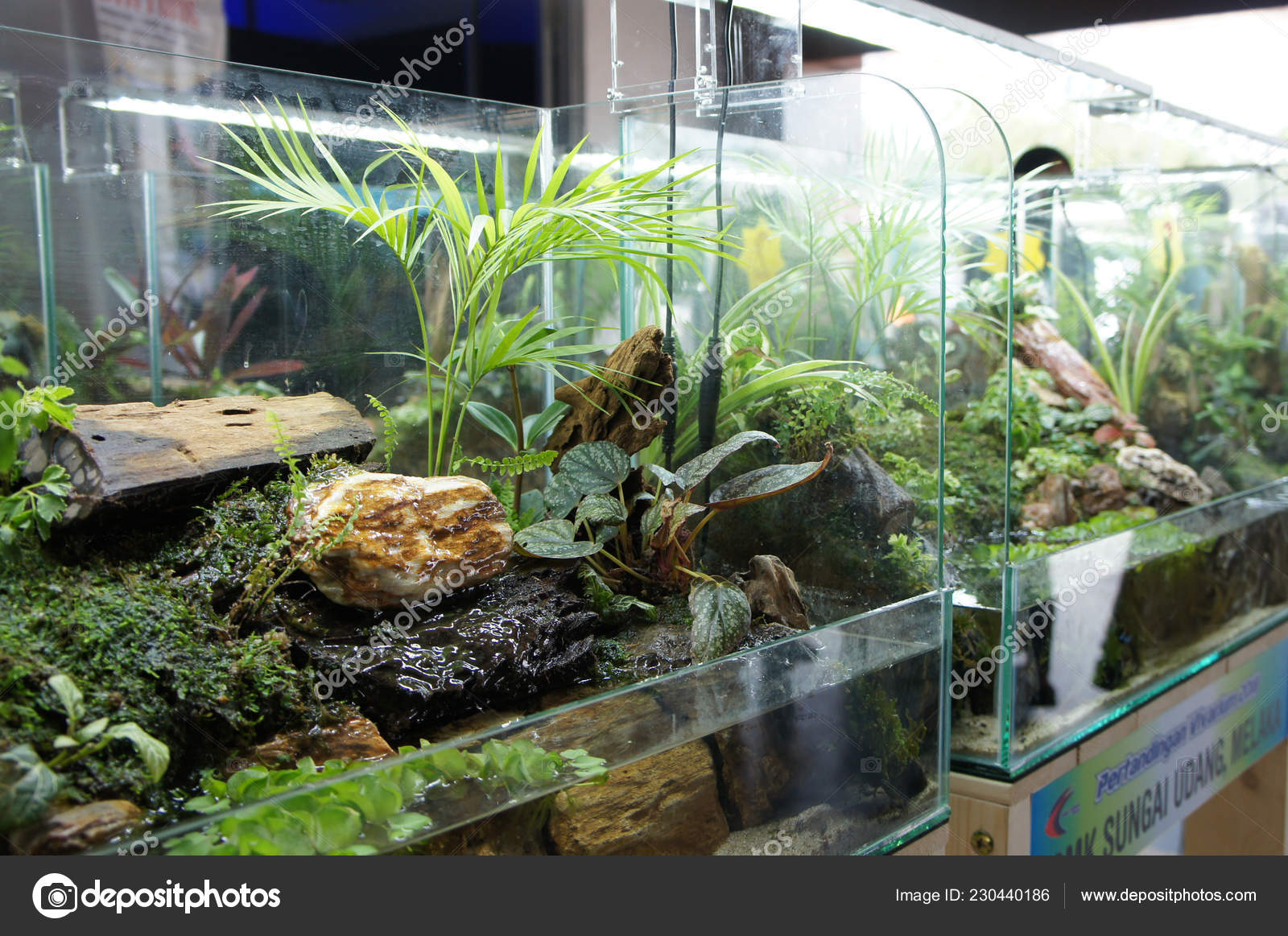 62+ Foto Aquarium Design Small Terbaik Download Gratis