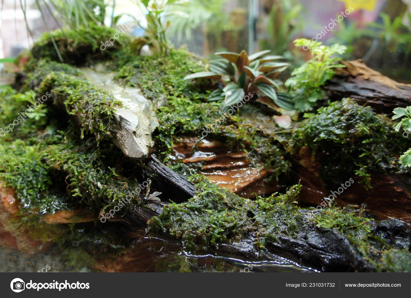 Aquascape Terrarium Design Small Glass Aquarium Displayed Public Stock Photo Image By C Aisyaqilumar 231031732