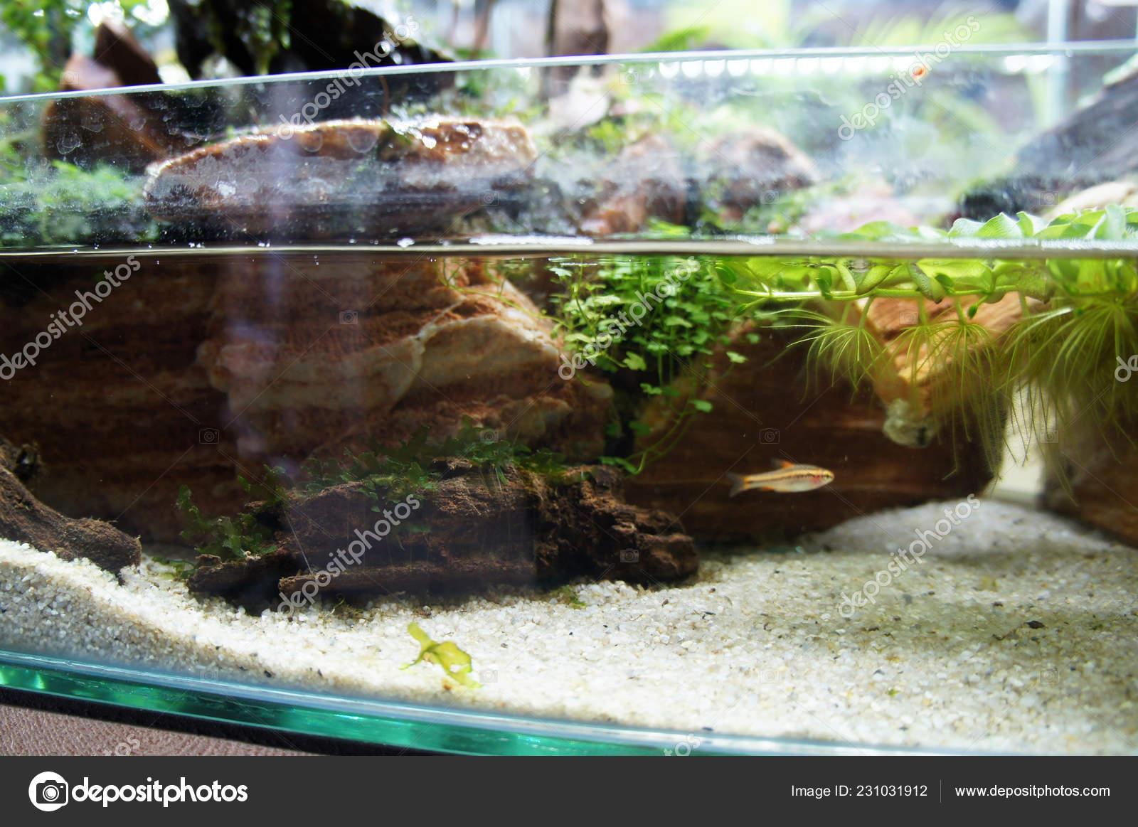 Aquascape Terrarium Design Small Glass Aquarium Displayed Public Stock Photo C Aisyaqilumar 231031912