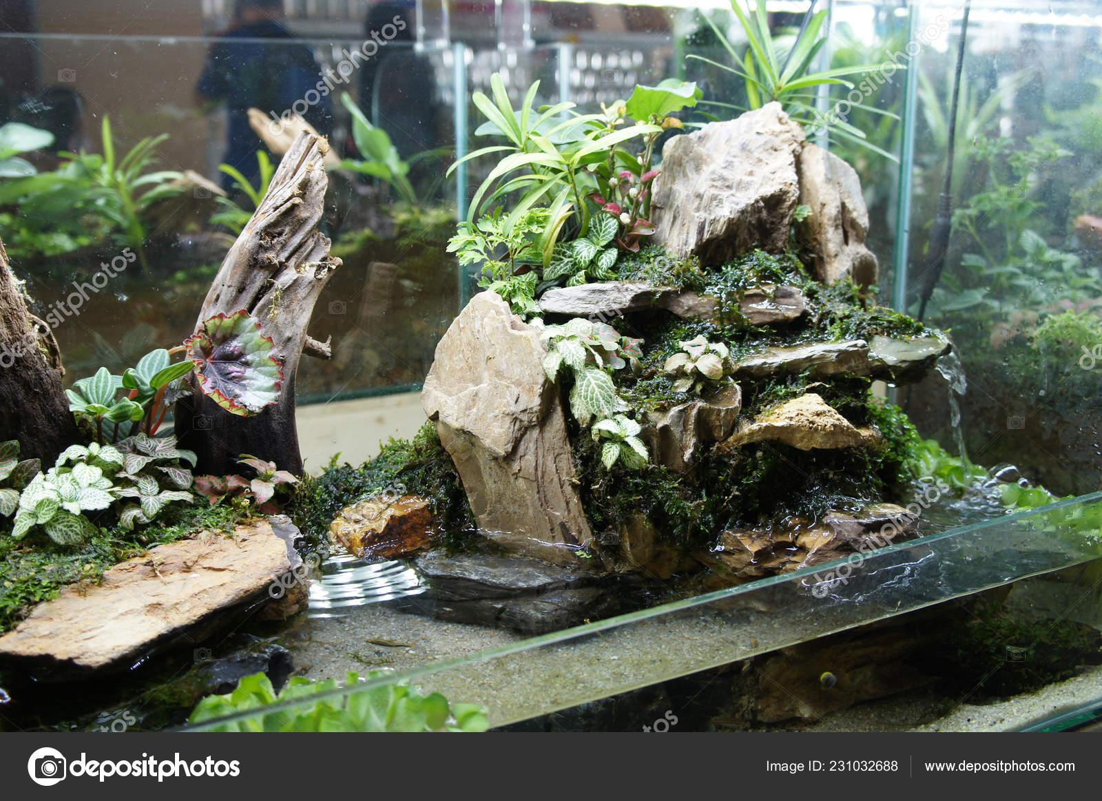Aquascape Terrarium Design Small Glass Aquarium Displayed Public Stock Photo Image By C Aisyaqilumar 231032688