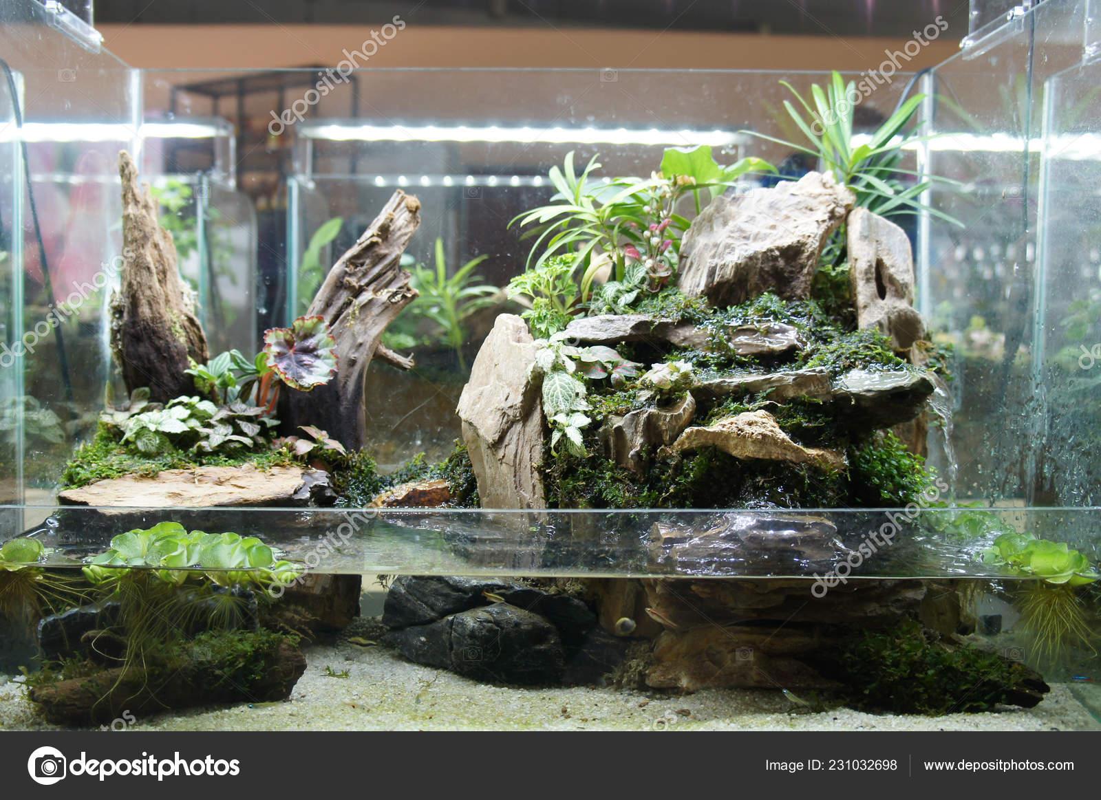 Aquascape Terrarium Design Small Glass Aquarium Displayed Public Stock Photo Image By C Aisyaqilumar 231032698