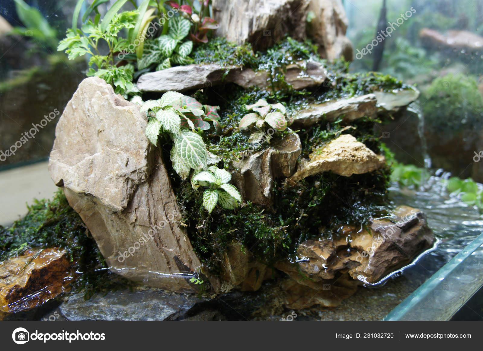 Aquascape Terrarium Design Small Glass Aquarium Displayed Public Stock Photo Image By C Aisyaqilumar 231032720
