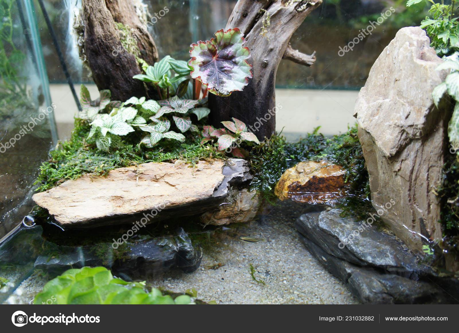 Aquascape Terrarium Design Small Glass Aquarium Displayed Public Stock Photo Image By C Aisyaqilumar 231032882