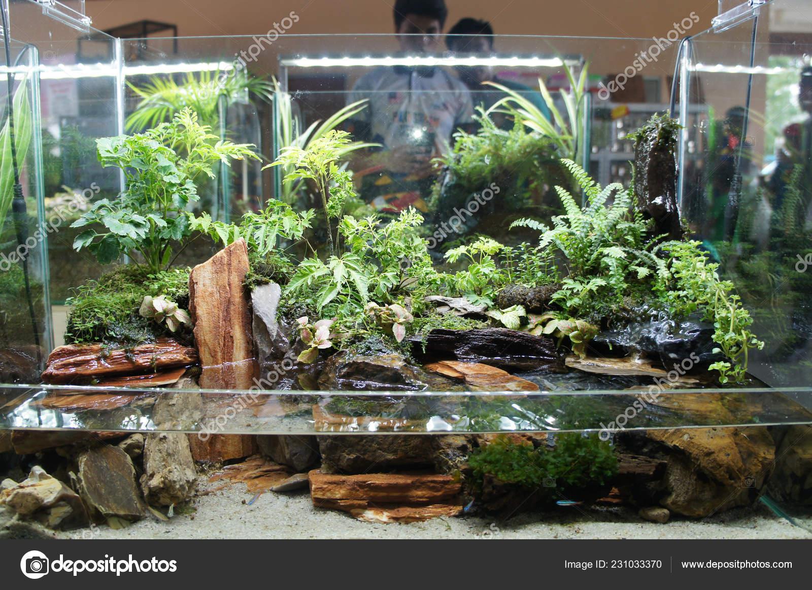 Aquascape Terrarium Design Small Glass Aquarium Displayed Public Stock Photo Image By C Aisyaqilumar 231033370