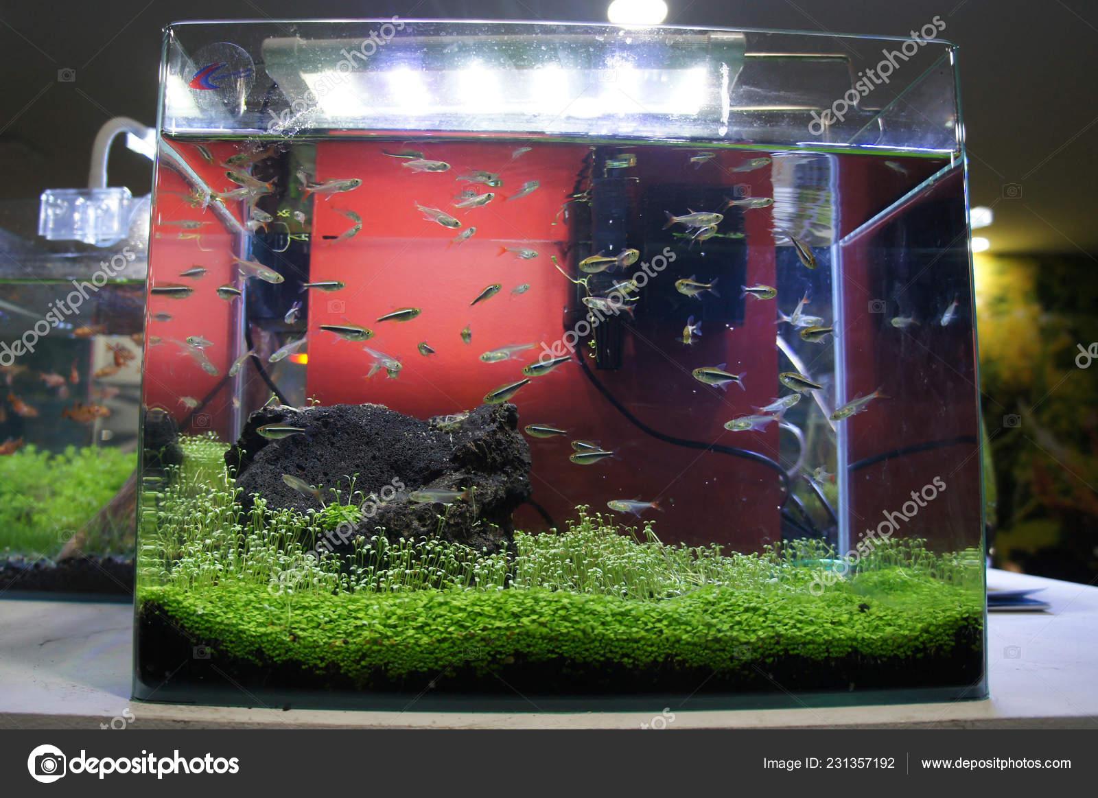 Aquascape Terrarium Design Group Small Fish Small Glass ...