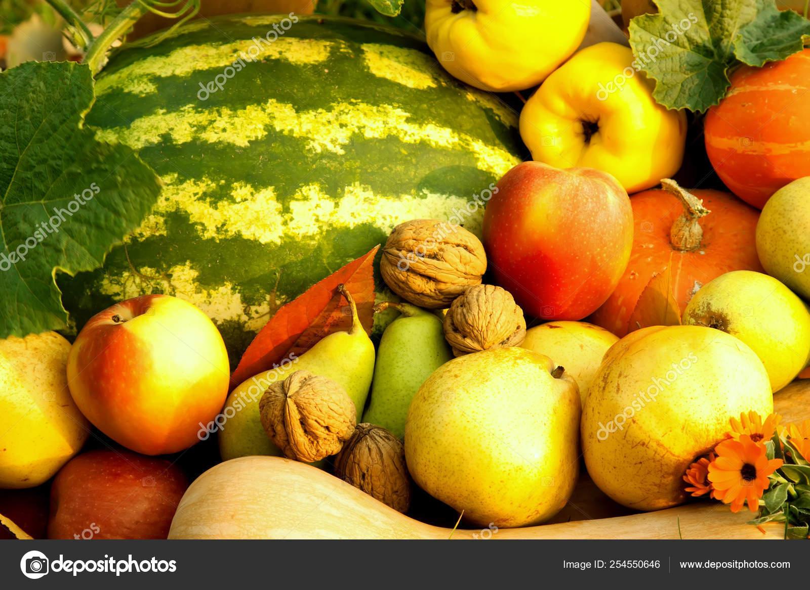 Harvest In The Autumn Garden Healthy Food Stock Photo