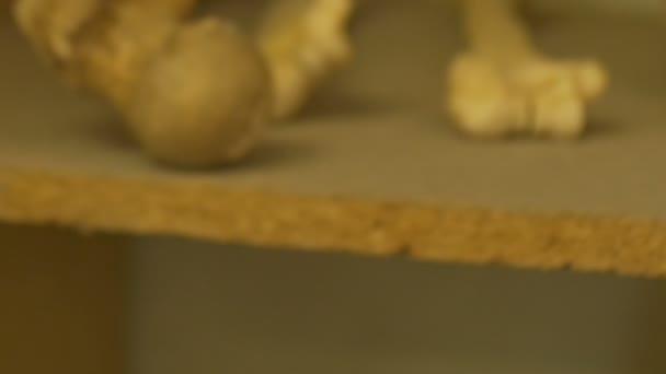 Starobylé lidské lebky zuby vystaveny v laboratoři