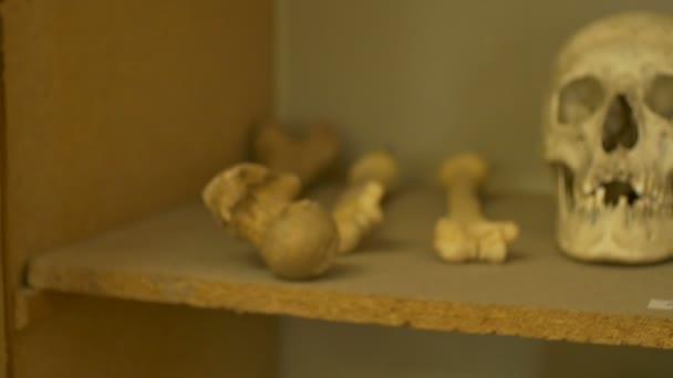 Pohled na starověké lidská lebka a kosti
