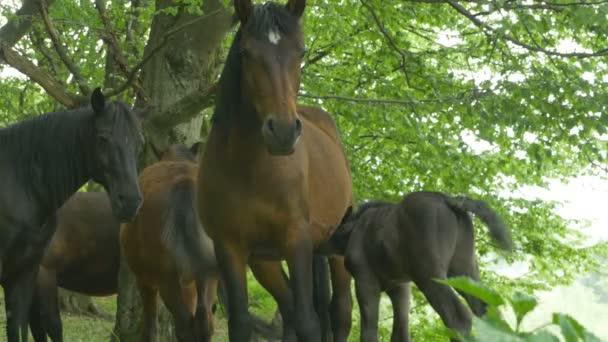 Skupina koní a hříbatů v lese.