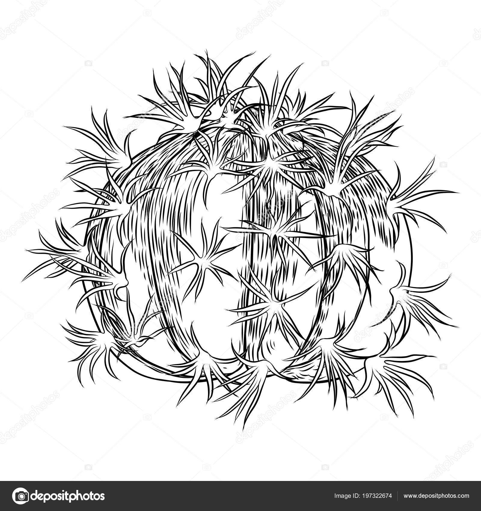 Drawings Cute Cactus Cute Cactus Illustration Handmade Hand Drawn Outline Cacti Succulent Drawing Stock Vector C Goldenshrimp 197322674