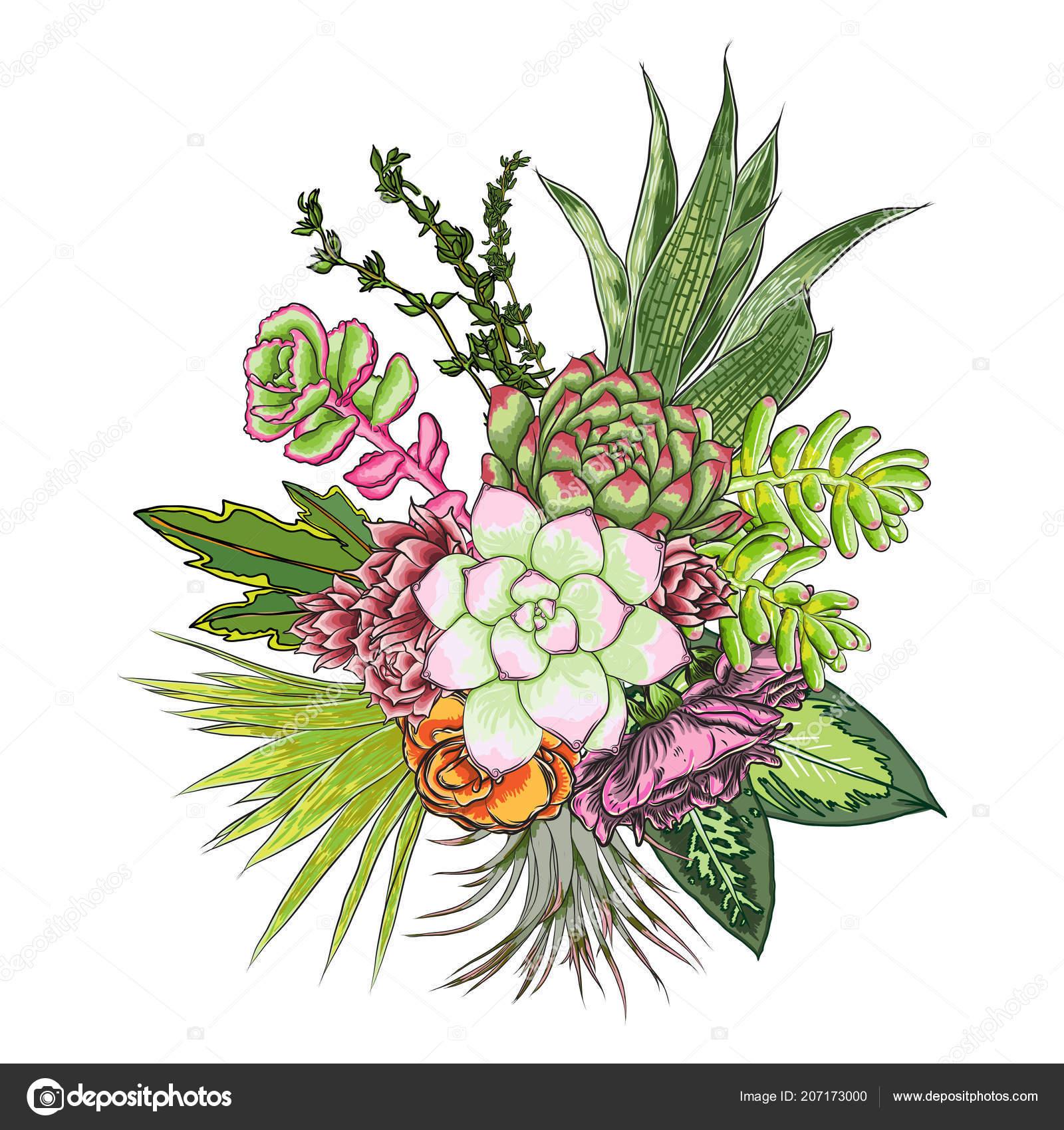 Green Colorful Succulent Echeveria Design Bouquet Imitation Watercolor Natural Cactus Stock Vector C Goldenshrimp 207173000