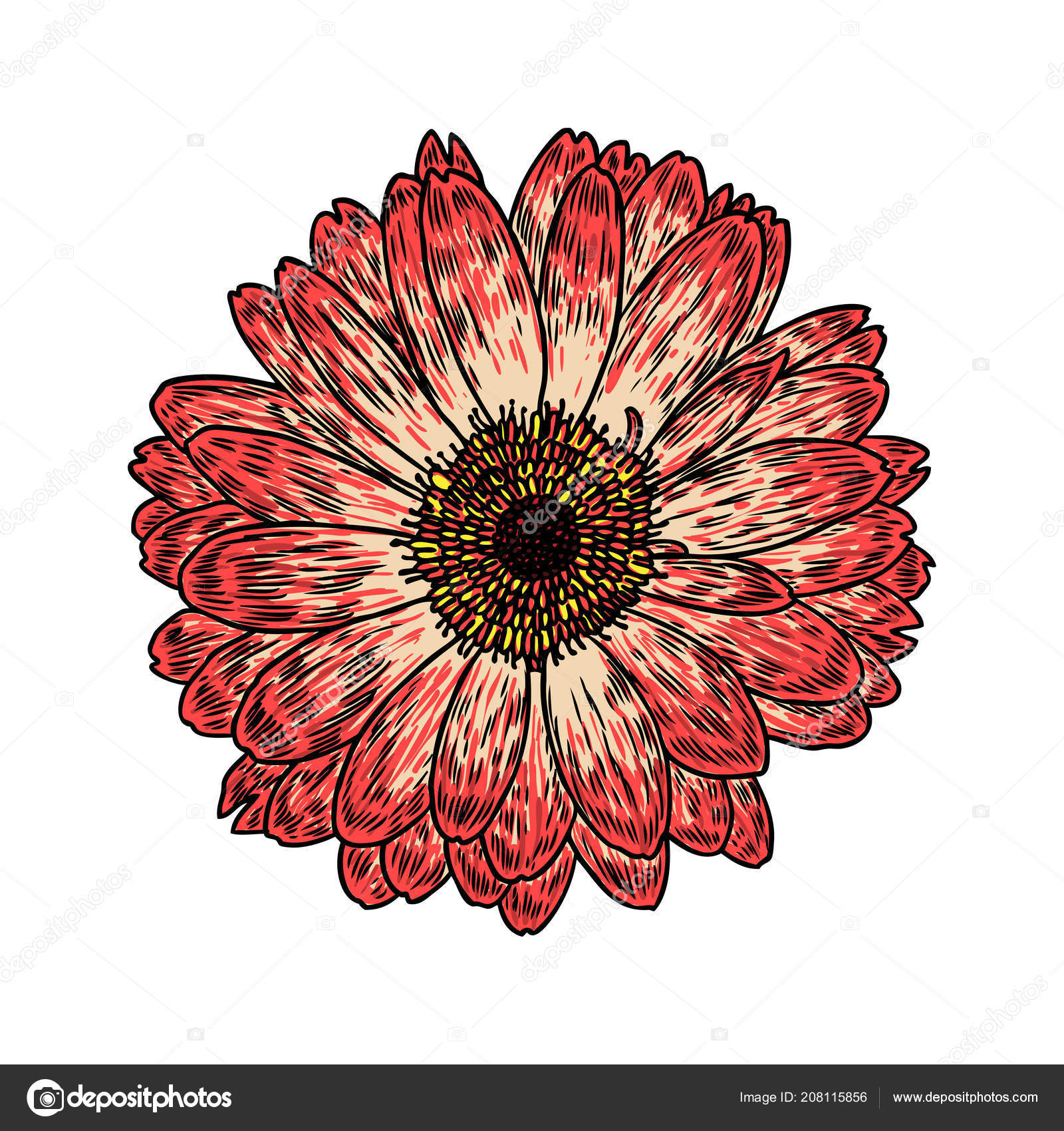 Daisy Floral Botany Sketch Daisy Flower Drawing Color Line Art
