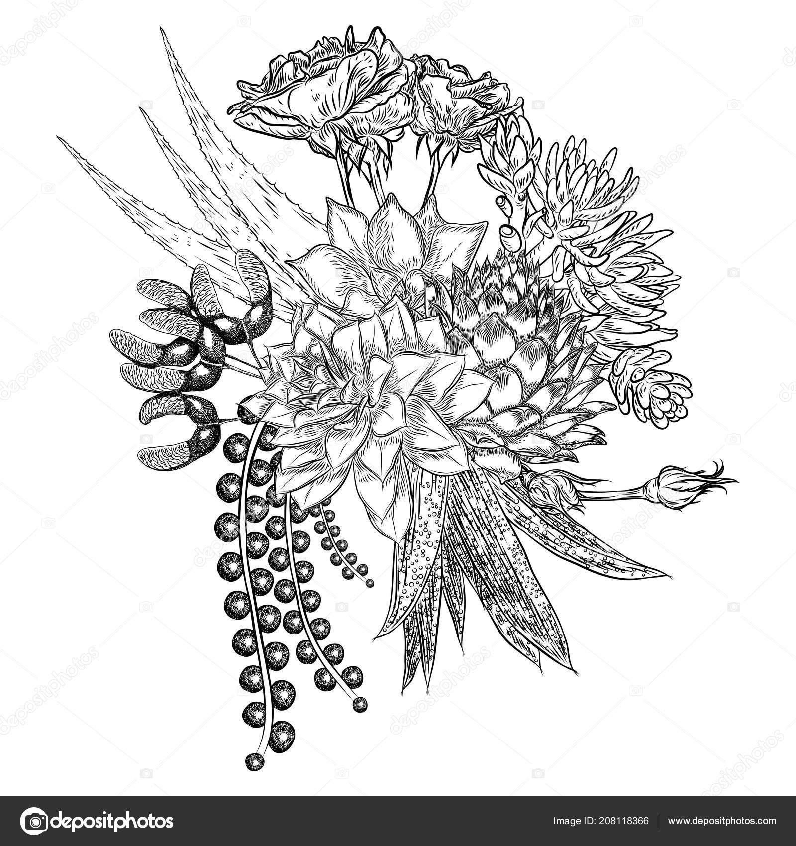Succulent Tattoo Black Composition Succulents Cactus Green Plants Botanical Drawing Black White Handdrawn Stock Vector C Goldenshrimp 208118366