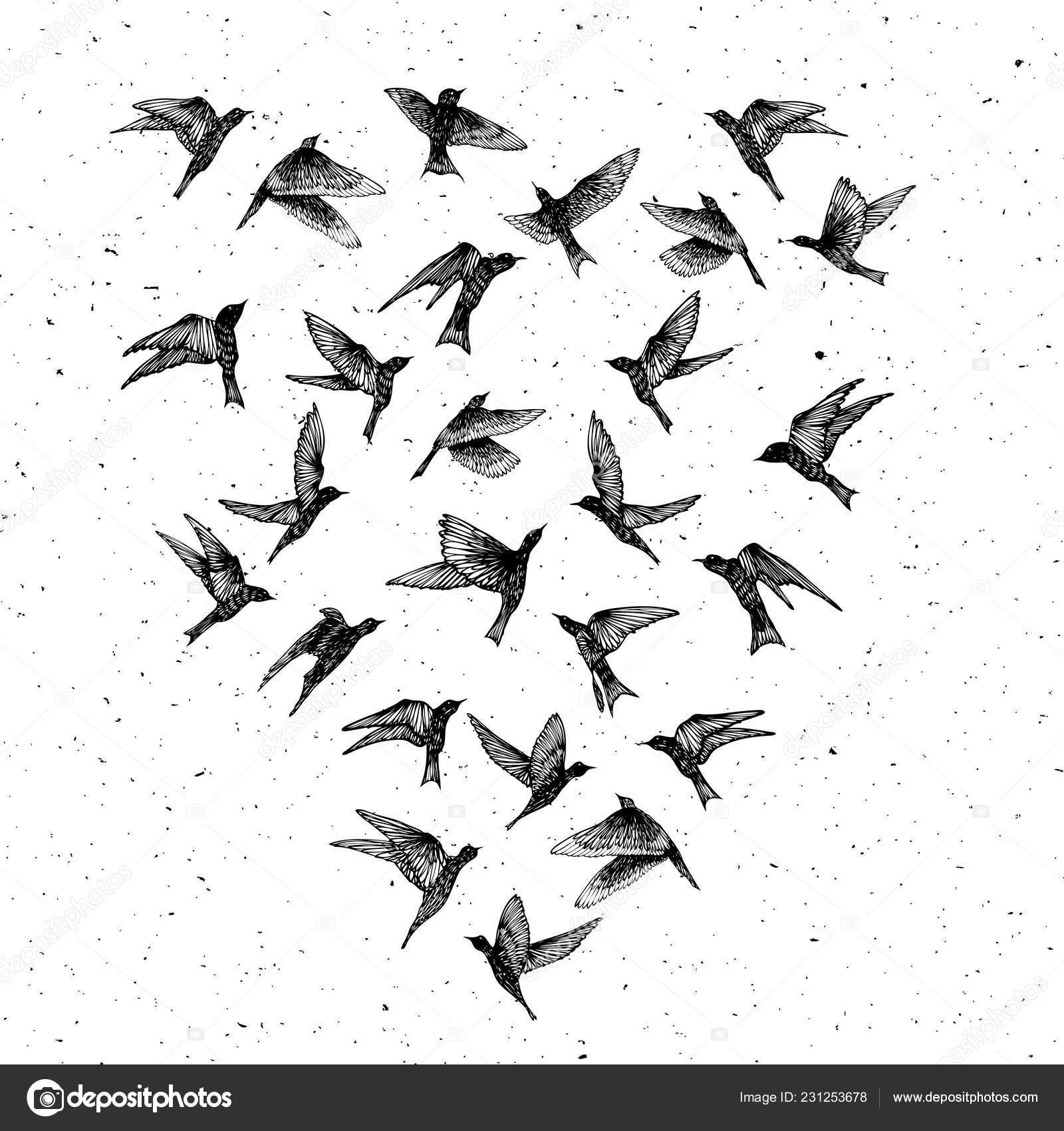 Conjunto Pássaros Traços Preto Mão Desenhada Rebanho Esboço