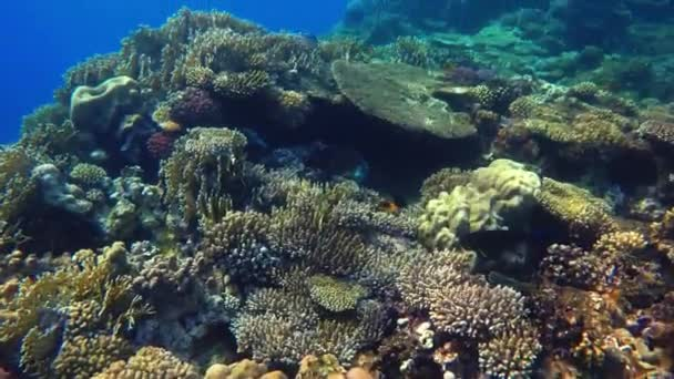 Korálový útes, tropické ryby. Teplý oceán a čistou vodou. Podvodní svět. Potápění a šnorchlování. Život v oceánu. Tropické ryby a korálové útesy. Přírodní podmínky prostředí.