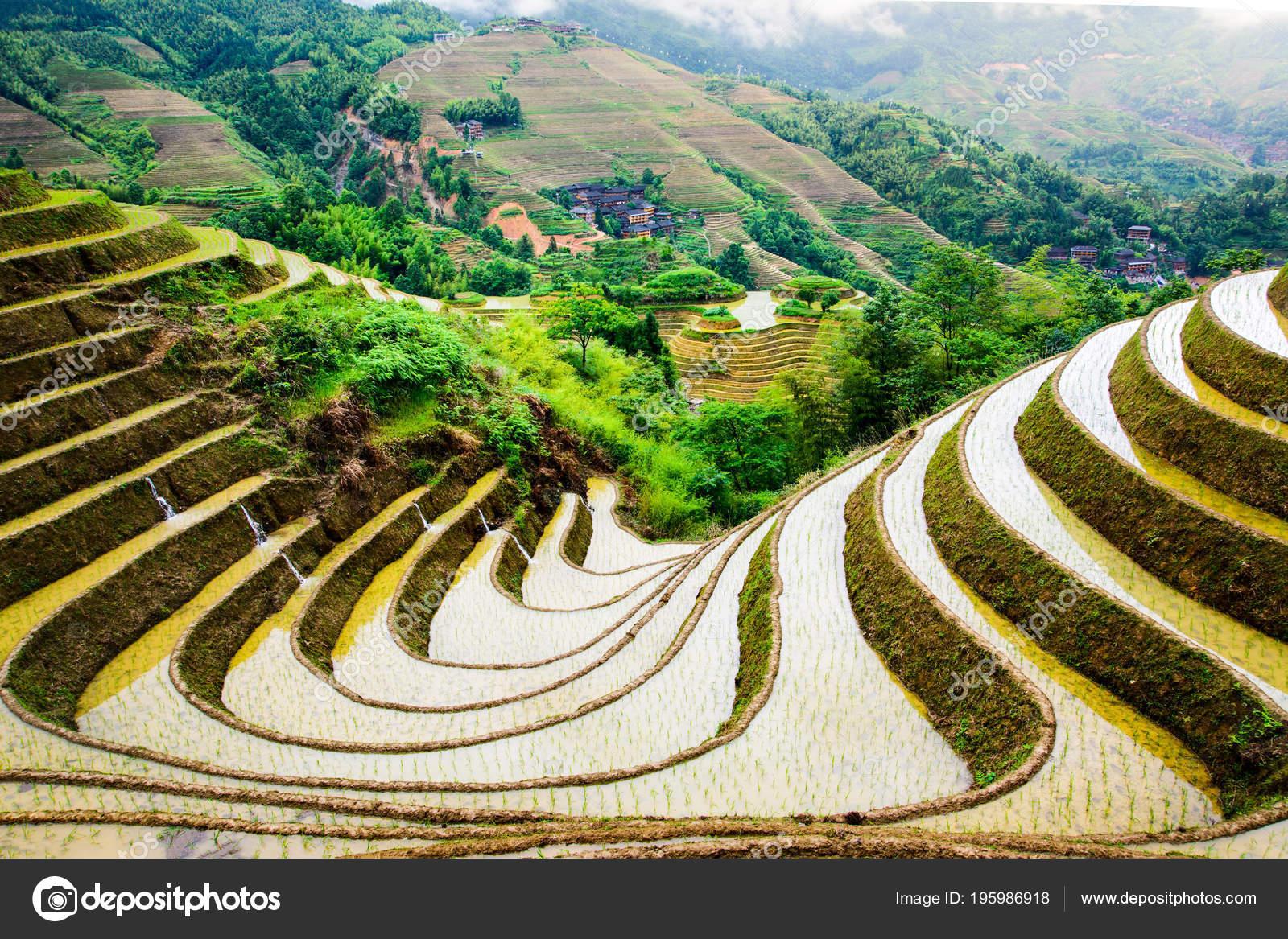 Superbe Décor Terrasse Riz Chinois Près Guilin Dans Province Guangxi ...