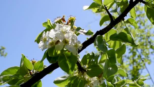 Stromy a větve s květů hrušní a jabloní růžové barvy na jaře venku