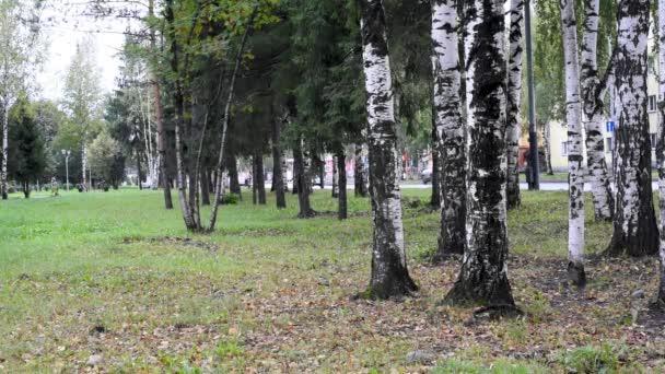 Őszi Park, a sárga és zöld lombok fák és cserjék, szemben a szürke ég, imbolygott a szélben